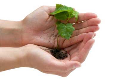 saving-seeds